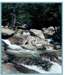 Imagen del río Salenques en el tramo desde cola Embalse de Senet hasta confluencia río Bueno.