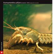 especie amenazada - cangrejo de río