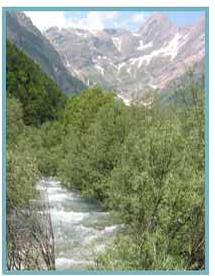 Río Cinca. Valle de Pineta.