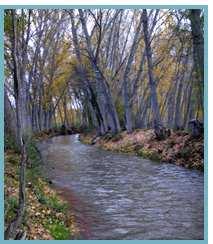 Imagen del río Jiloca en el tramo entre las localidades de Manchones y Murero.