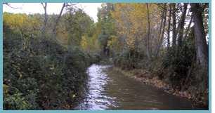 Imagen del río Jiloca en el tramo entre las localidades de Manchones y Murero