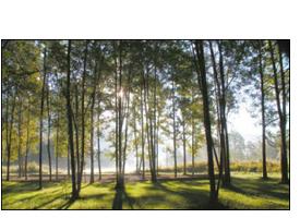 Fotografía de un bosque
