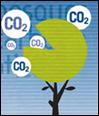 Árbol con copa en forma de gráfico circular. De una porción sin dibujar salen círculos con la palabra CO2