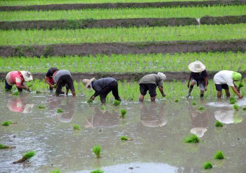 Trabajo en el arrozal, fotografía de Javier del Valle Melendo.